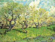 Orchard In Blossom 2