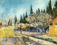 Orchard Surrounded By Cypresses