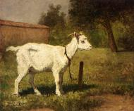 A Goat In A Meadow