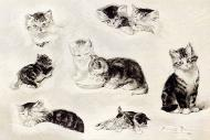 A Study Of Cats Drinking Sleeping And Playing